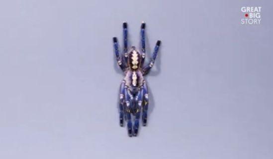 tarantula.jpg